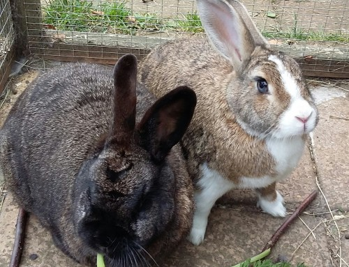 BETSY (R13/19) AND BARCLAY (R14/19)