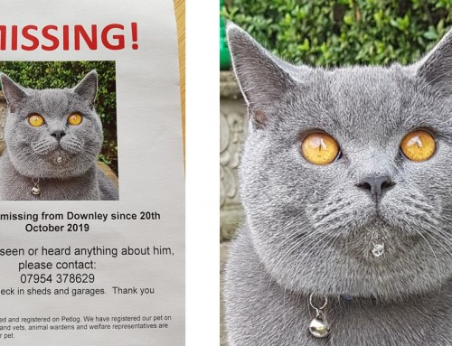 MISSING CAT: MARLEY